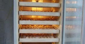 Ngạc nhiên ấp trứng từ tủ lạnh cũ